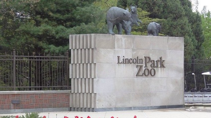 [chicagogram] Lincoln Park Zoo is home to a wide variety of animals. The zoo's exhibits include big cats, polar bears, penguins, gorillas, reptiles, monkeys, and other species totalling nearly 1,250 animals. Also located in Lincoln Park Zoo is a burr