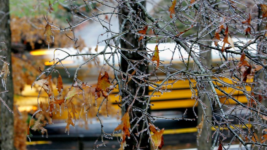 A Fulton County school bus is obscured by ice laden branches