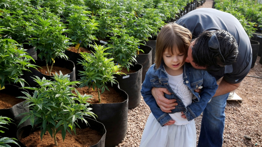 Matt Figi hugs and tickles his once severely-ill 7-year-old daughter Charlotte in a greenhouse used for growing cannabis
