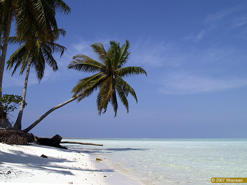 Beach Scene Shazwan