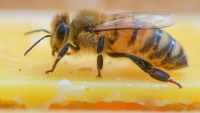 US Honeybees Are Doing Better After Bad Year, Survey Shows