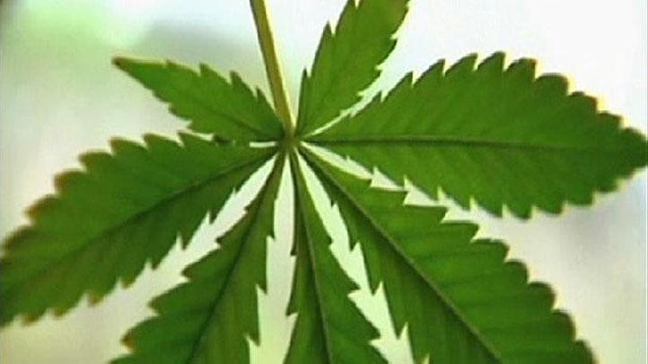 Marijuana-leaf-1108
