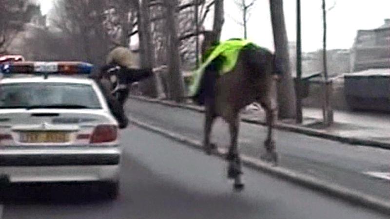 Runaway_Horse800