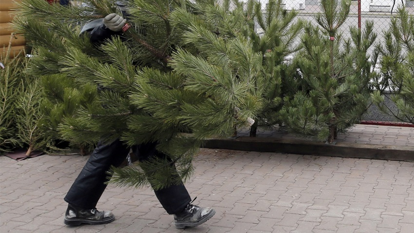 Why Your Christmas Tree Might be Making