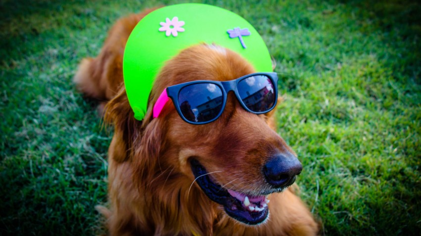 [UGCDFW-CJ-dog days]How to be a Cool dog on a Hot day
