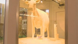 butter cow 2