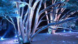 [UGCCHI-CJ-holiday lights]Morton Arboretum Illumination event