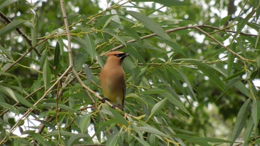 [UGCCHI-CJ-holiday lights]Beautiful Bird