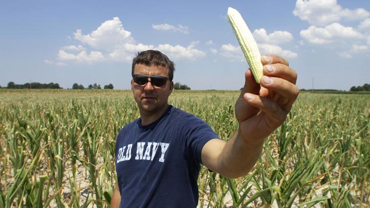 Food And Farm Drought Corn