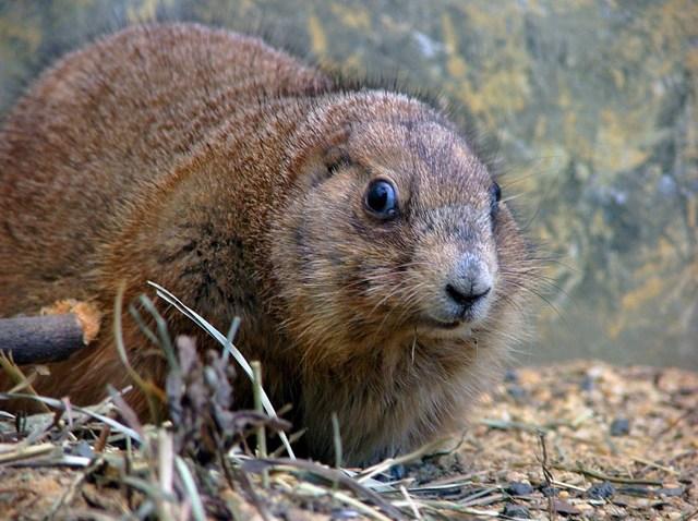 [Phist] groundhog081809.jpg