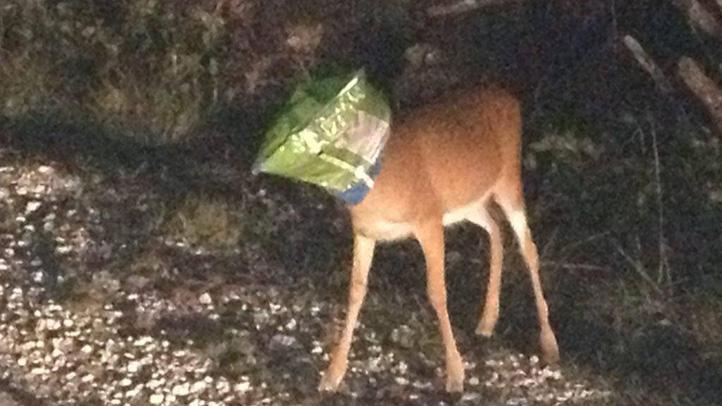 key deer1