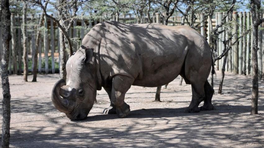 Kenya Rhino Dating App