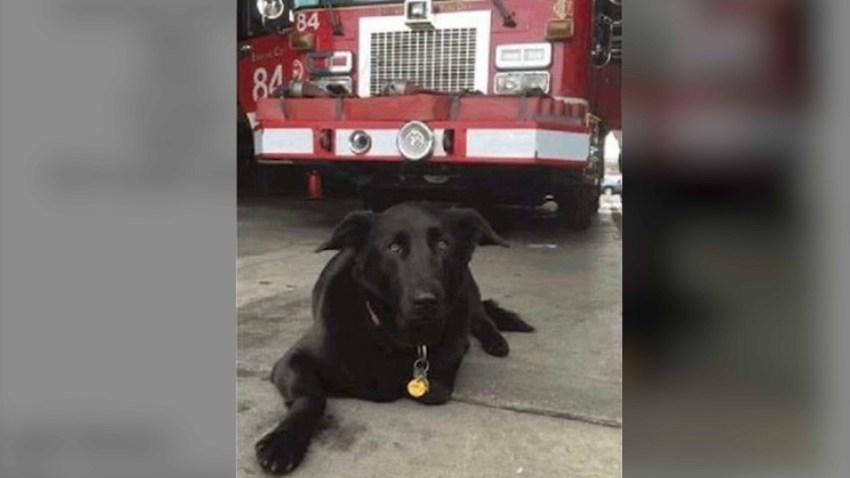 missing firehouse dog