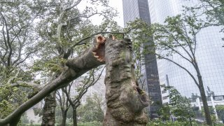 Downed tree seen in the park after tropical storm Isaias lashes out New York City as seen in lower Manhattan, New York, United States on August 04, 2020.