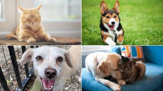 Clear the Shelters hosts Bark Week, a virtual meeting of shelter pets available for adoption powered by Google Meet, takes place from Aug. 10 to 14.