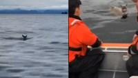 WATCH: Crew Rescues Alaska Deer Stranded in Cold Water
