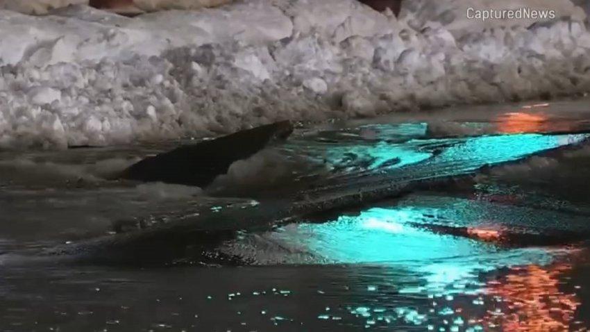 A broken water main spews water onto Adams Street near the Willis Tower on Feb. 17, 2021.