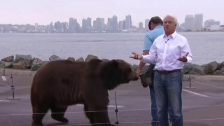 Gubernatorial Candidate John Cox and Tag the Bear