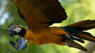 Brazil Rio Macaw Love