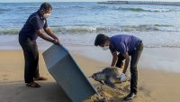 Turtle Carcasses Wash Ashore in Sri Lanka After Cargo Ship Fire