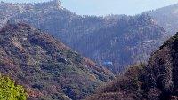 Study: California Fire Killed 10% of World's Redwood Trees