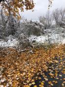 [UGCCHI-CJ][EXTERNAL] Fall Meets Winter