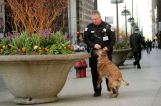 Police Dog Retirement