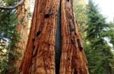 Giant Sequoia National Monument, California