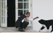 OBAMA AND DOG BO