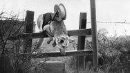 WWII England Defence Dog Lays Cable