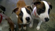 tlmd_dogs_generic_shelter_puppies