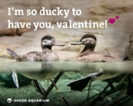 'I've Only Got Walleyes for You': Shedd Releases Punny Valentines
