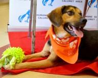 [UGCCHI-CJ-pets]Dudley at Humane Society Calumet Area