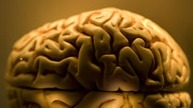 9 Brains Found Next to Train Tracks in NY