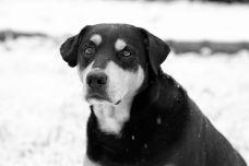 Photos: Area Residents, Pets Enjoy Snowfall