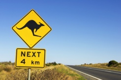 Cyclists 'Jumped' by Kangaroo in Australia