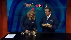 Adopt-A-Pet: February 15