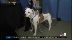 Clear the Shelters: Feb. 7, 2015