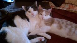 Adopt A Pet, Sunday March 13