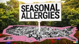Pollen Problems: How Climate Change Supersizes Allergy Season