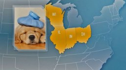 Canine Influenza Spreads in Midwest