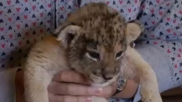 Two Lion Cubs Make Debut in Tokyo