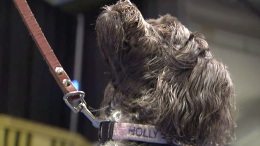 Therapy Dogs Help Calm Rio Hopefuls