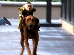 Bobo the Monkey Rides Red the Dog to Promote State Fair