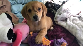 'Unicorn Puppy' Will Stay With Missouri Rescue Mission