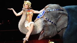 Ringling Bros. Eliminating Elephant Acts by 2018