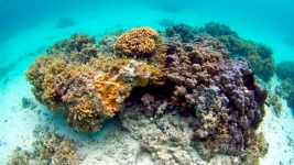 Coral-Bleaching Crisis Spreads