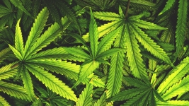 Legal Pot Business Owners Ponder Possibility of Death Row