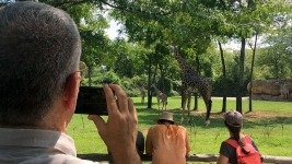 Eclipse Science: From Galloping Giraffes to Solar Wisps