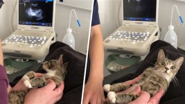 You're Kitten Me? Cat Shocked By Pregnancy News